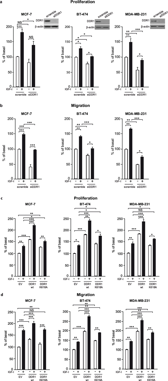 DDR1 expression affects IGF-I mediated biological effects in human cancer cells.