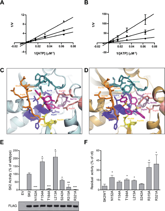 MP-A08 is a novel ATP-competitive inhibitor for SK1 and SK2.
