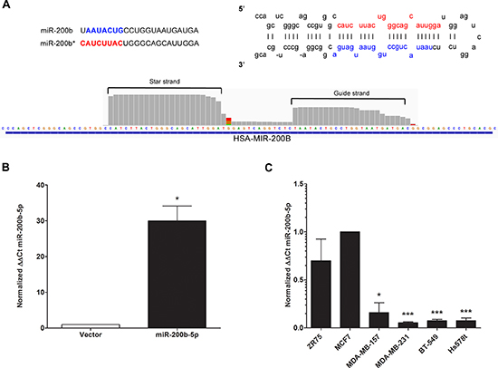miR-200b-5p is differentially regulated between ER+ and triple negative breast cancer subtypes.