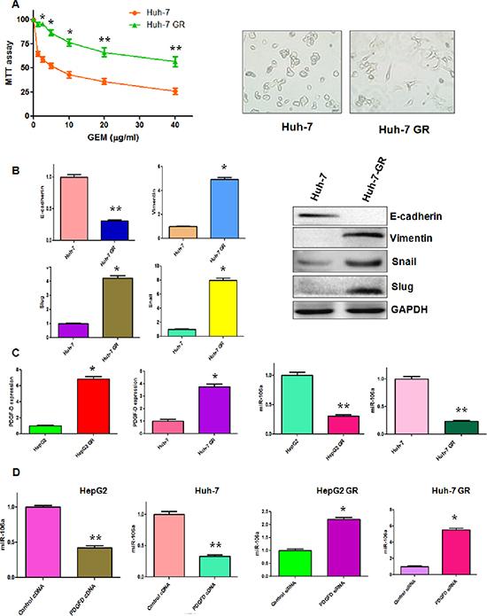 PDGF-D regulates miR-106a expression.