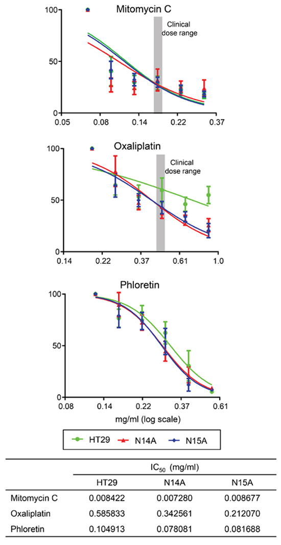 We tested the in vitro sensitivity of the immortalized cell lines (N14A, N15A) and a comparator colon cancer cell line, HT-29, against commonly used chemotherapy agents—mitomycin C and oxaliplatin—and Phloretin, an apple metabolite previously reported as an inhibitor of lactate and pyruvate transport, and used here as an example of a pathway inhibitor.