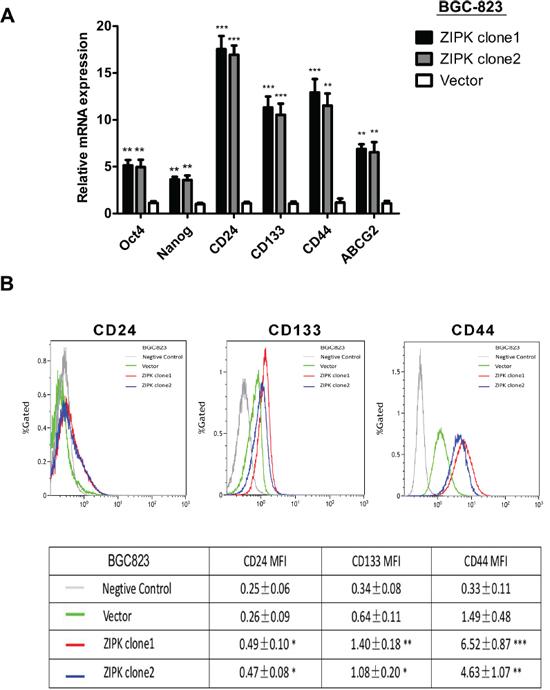 ZIPK enhances stemness of gastric cancer cells.