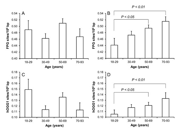 Levels of oxidatively damaged DNA in PBMCs from subjects in different age groups of men (A and C) and women (B and D).