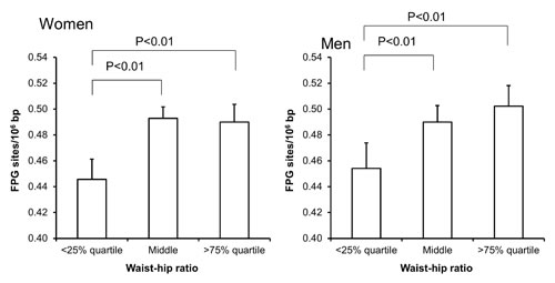 Levels of FPG-sensitive sites in PBMCs from subjects stratified into WHR level being less than the 25% quartile, middle or more the 75% quartile for the sex.