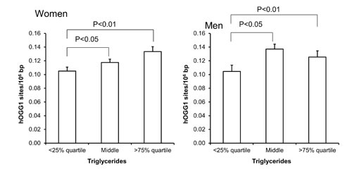 Levels of hOGG1-sensitive sites in PBMCs from subjects stratified into serum levels of triglycerides being less than the 25% quartile, middle or more the 75% quartile for the sex.