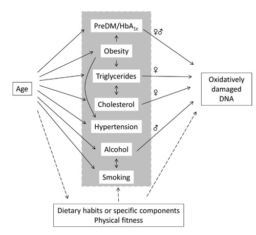 Associations between age, mediators and oxidatively damaged DNA in PBMCs in the present study.