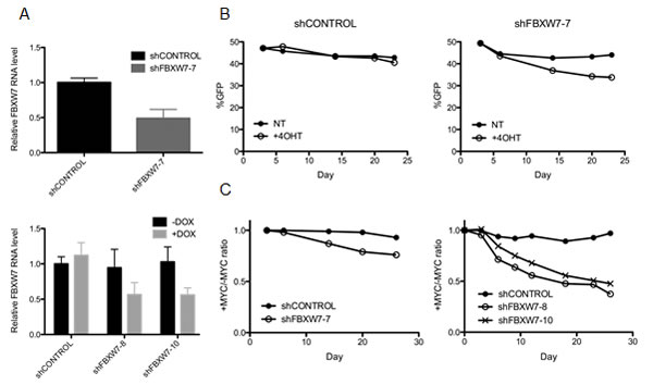 Loss of FBXW7 combined with MYCER activation is lethal.