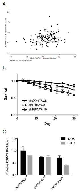T47D breast cancer-derived cells are selectively sensitive to FBXW7 knockdown.
