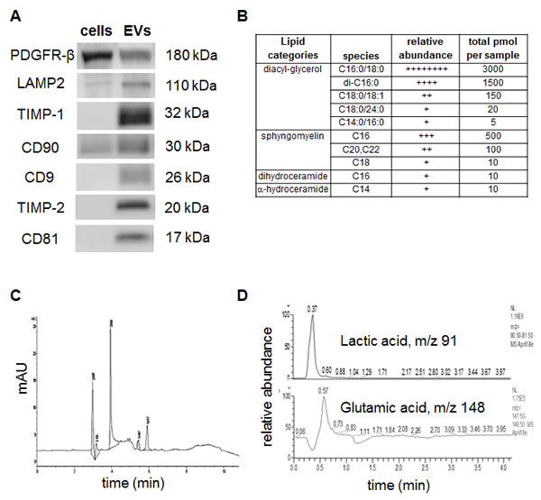 Figure 2 : Detection of specific proteins and small molecule metabolites in EVs: