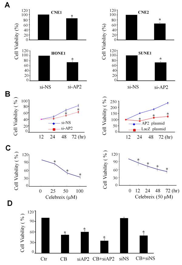 Regulation of NPC cell proliferation by AP-2α.