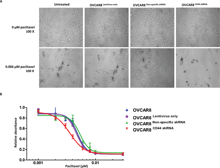Knockdown of CD44 by lentiviral shRNA increased the paclitaxel sensitivity of ovarian cancer cells.