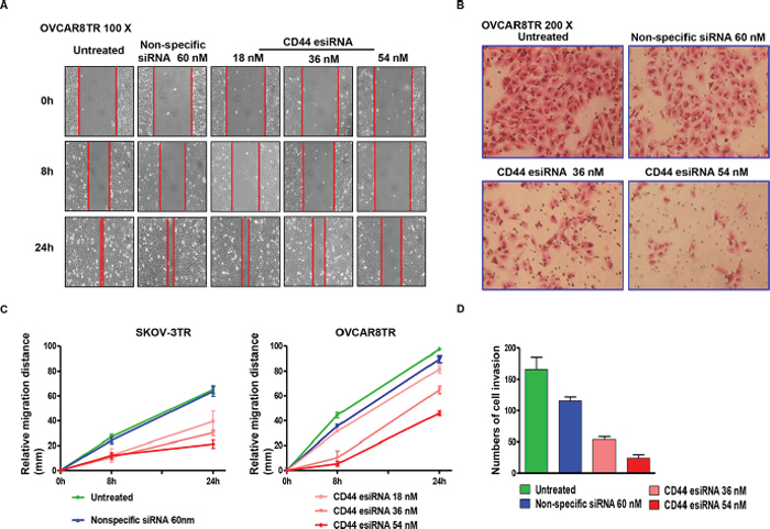 Transfection of CD44 esiRNA suppressed the migratory and invasion activity of ovarian cancer cell lines.
