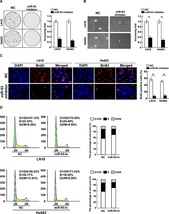 Inhibition of miR-93 reduces cell proliferation and cell-cycle progression in glioma cells.