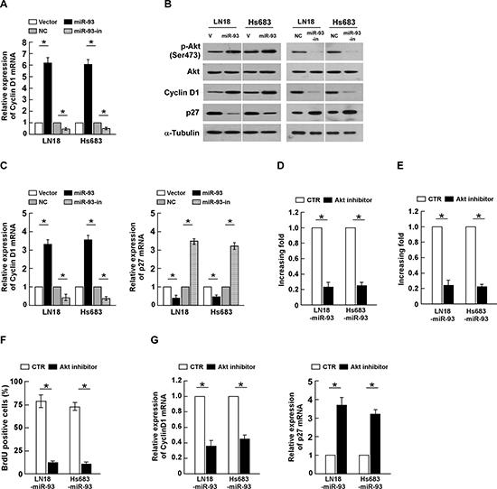 miR-93 activates PI3K/Akt signaling.