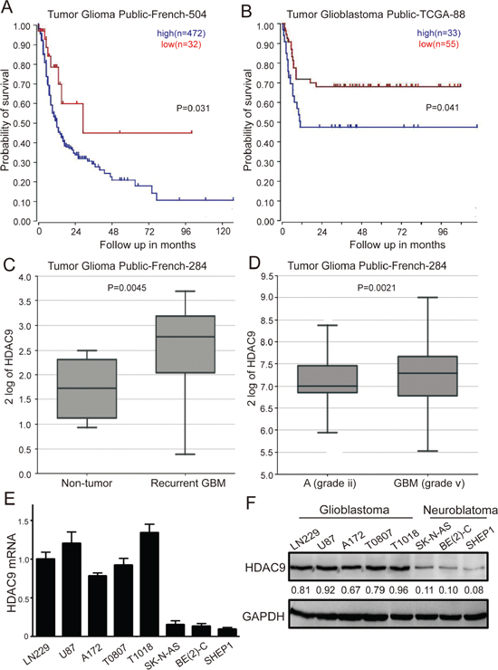 High HDAC9 expression is a prognostic indicator of poor survival in glioblastoma patients.