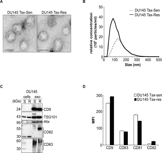 Characterization of extracellular vesicles secreted from docetaxel sensitive and resistant DU145 cells.
