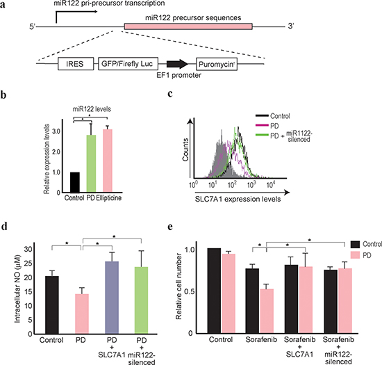 PD407824 increases miR122 expression and sensitizes Hep3B cells to sorafenib treatment.