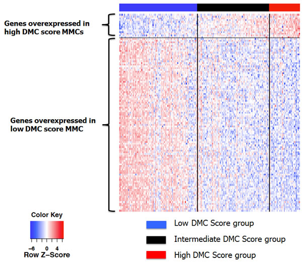 Heatmap of the supervised clustering of genes differentially expressed between low and high DMC score MMCs of patients of the HM cohort.