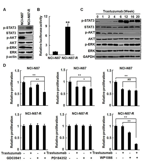 Survival signaling was shifted in NCI-N87-R cells.