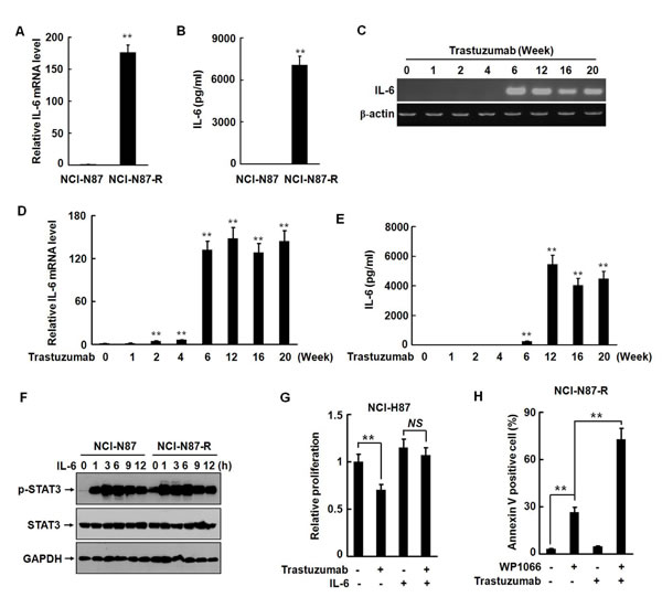 IL-6 autocrine is involved in development of trastuzumab resistance in NCI-N87 cells.