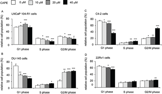CAPE treatment induced G1 or G2/M cell cycle arrest in CRPC cells.