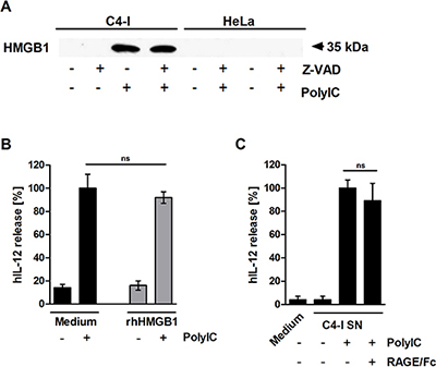HMGB1 is released from PolyIC-stimulated C4-I cells.