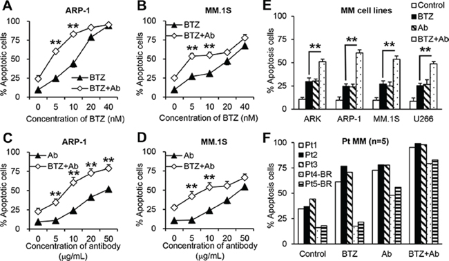Anti-β2M mAbs and BTZ combination treatment in MM cells.