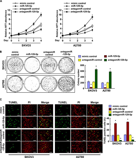 MiR-129-5p inhibits ovarian cancer cell proliferation and survival in vitro.