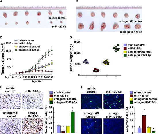 miR-129-5p suppresses tumorigenicity of ovarian cancer cells in vivo.