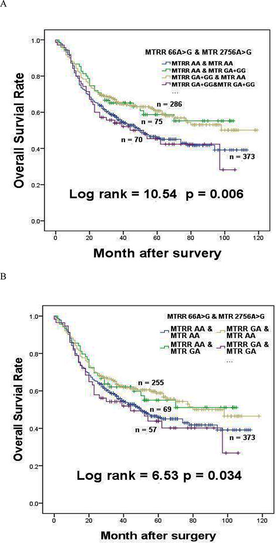 The effects of MTRR 66A > G interaction with MTR 2756A > G on survival of gastric cancer patients.