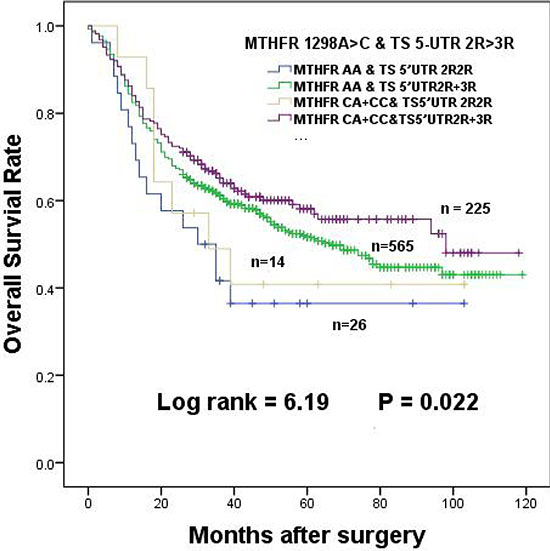 The effects of MTHFR 1298A > C interaction with TS 5-UTR 2R > 3R in dominant model on the survival of gastric cancer patients.