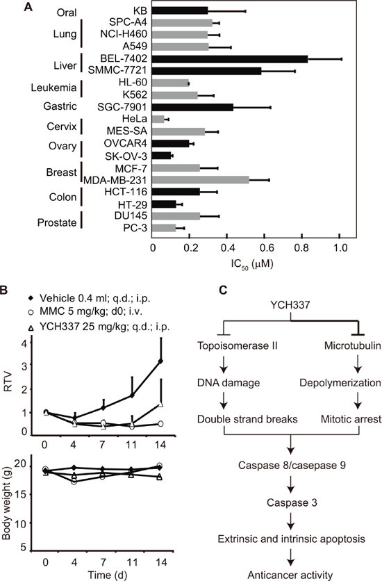 YCH337 inhibits proliferation and growth of human tumor cells in vitro and in vivo.