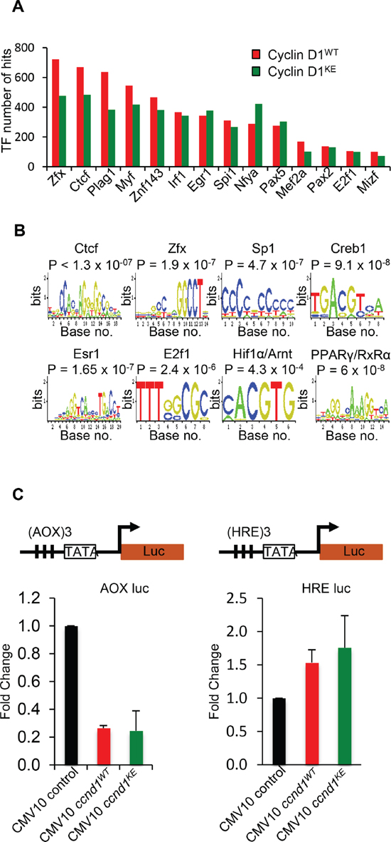Identification of transcription factor motifs found in cyclin D1WT and cyclin D1KE interval sequences.