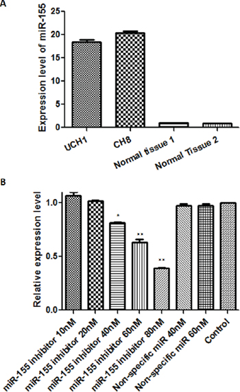 In vitro antagonism of miR-155 is feasible in chordoma cell lines.