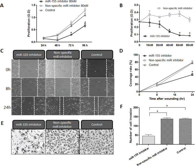 Inhibition of miR-155 decreases proliferation, migration, and invasion of chordoma cells.