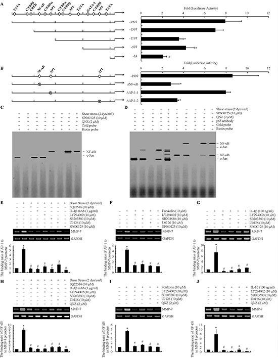 NF-κB and c-Jun are identified as the essential transcriptional factors for MMP-7 synthesis in human chondrosarcoma cells.