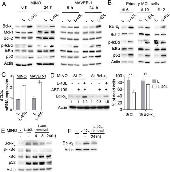 Up-regulation of Bcl-xL by CD40 stimulation confers ABT-199 resistance to MINO cells.