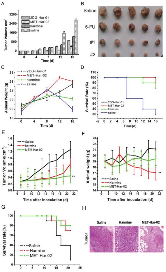 In vivo antitumor efficacy of 2DG-Har-01 and MET-Har-02 on S180 tumor-bearing mice and MCF-7 tumor-bearing nude mice.
