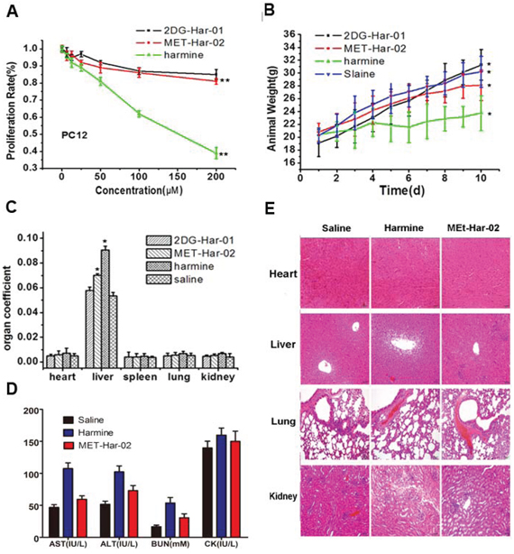 The neurotoxic and acute toxicities of 2DG-Har-01 and MET-Har-02 on healthy mice.