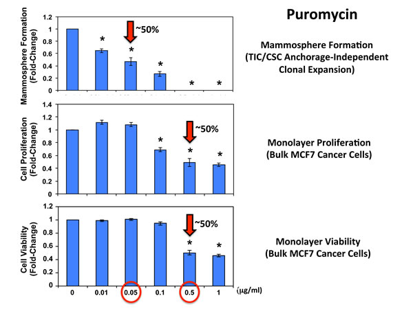 Puromycin significantly reduces mammosphere formation in MCF7 cells, without affecting MCF7 cell viability or proliferation.