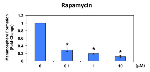 Rapamycin significantly reduces mammosphere formation in MCF7 cells.