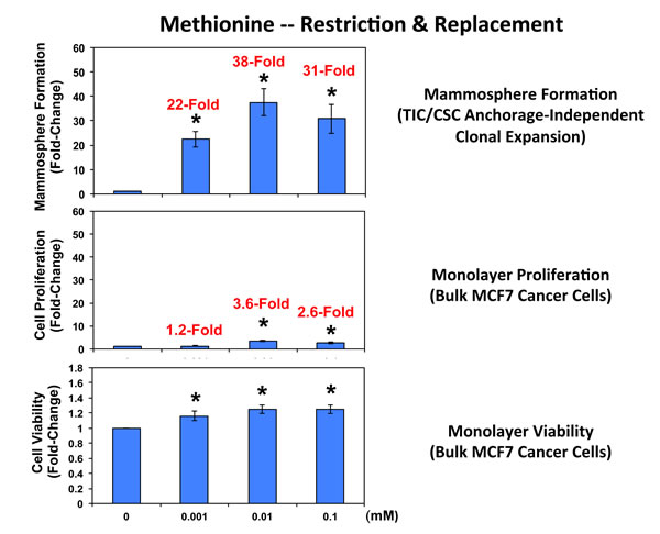 Methionine restriction significantly reduces mammosphere formation in MCF7 cells.
