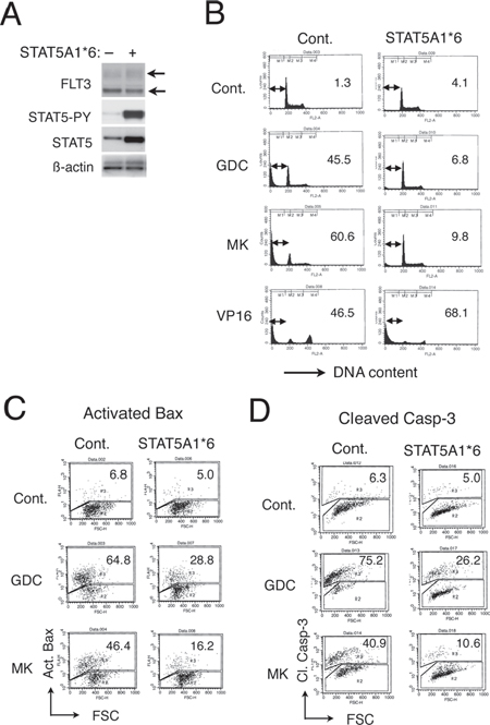 A constitutively activated STAT5 mutant, STAT5A1*6, confers resistance to GDC-0941 and MK-2206 on 32D/TKD cells.