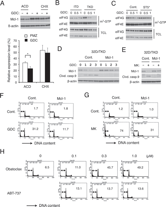 FLT3-ITD may sustain cap-dependent translation of Mcl-1 through STAT5 activation to prevent apoptosis in cells treated with the PI3K/Akt pathway inhibitors.