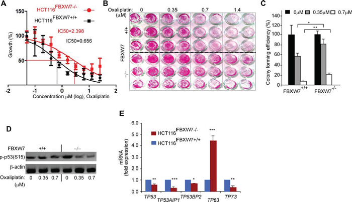 FBXW7 deficiency induces oxaliplatin drug resistance property of HCT116 CRC cells.