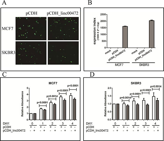 Effect of LINC00472 expression on breast cancer cell proliferation.