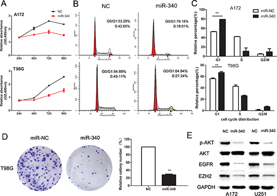Enforced expression of miR-340 induces growth inhibition in glioma cells.