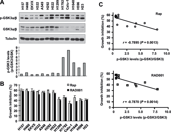 Basal levels of p-GSK3 in human lung cancer cell lines (A) are inversely correlated with cell sensitivity to rapalogs (B and C).