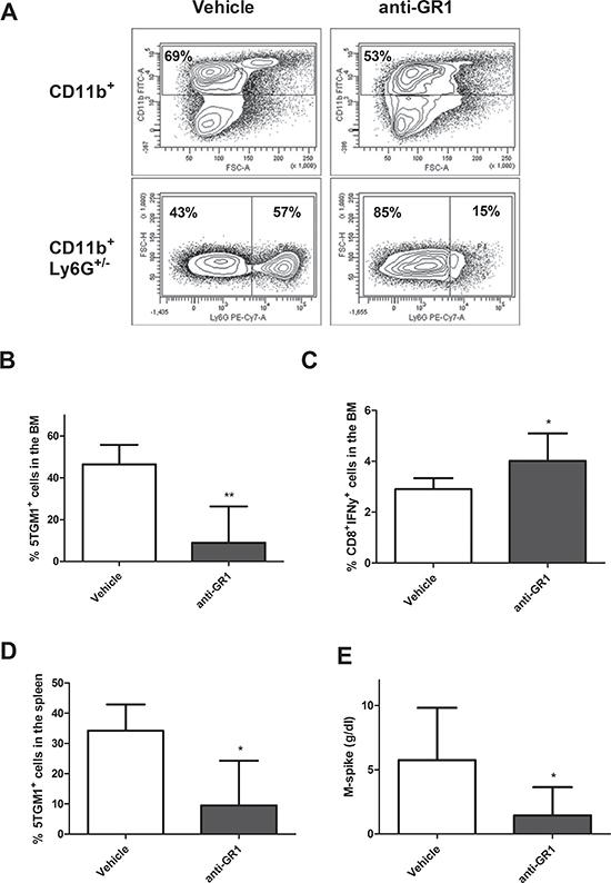 In vivo MDSC targeting by anti-GR1.