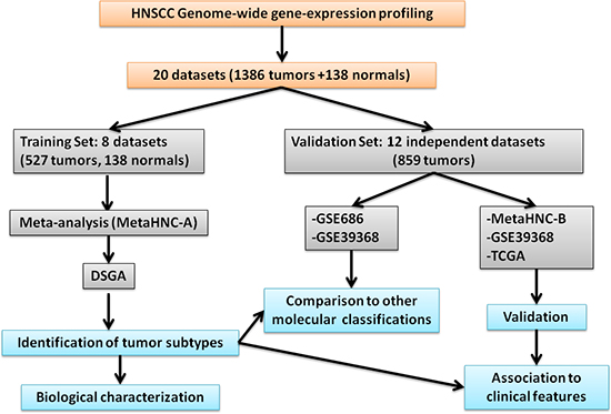 Oncotarget | Head and neck cancer subtypes with biological and